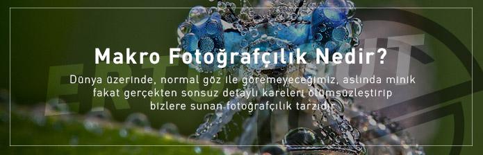 Makro Fotoğrafçılık Nedir